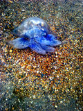 Kwallenoverzees stock afbeeldingen