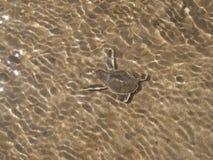 Kwamen de Hatchlings Groene zeeschildpadden op het strand in het water definitief in de oceaan aan royalty-vrije stock afbeelding