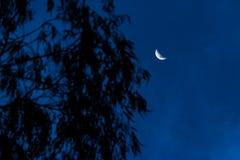 Kwartalna księżyc Fotografia Royalty Free