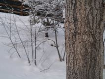 Kwartalny drzewo Fotografia Stock