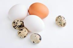 Kwartels, witte, bruine eieren op de lichte achtergrond Royalty-vrije Stock Foto's
