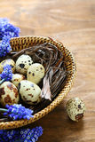 Kwartelseieren in een mand met hyacint Stock Fotografie