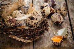 Kwartelseieren in een nest op een donkere houten achtergrond Stock Fotografie