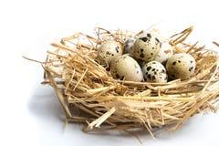 Kwartelseieren in een nest op witte achtergrond wordt geïsoleerd die stock foto