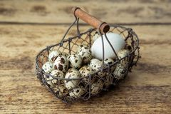 Kwartelseieren en Duck Egg stock afbeeldingen