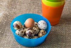 Kwartelseieren en kip voor het feest van Pasen voor het kleuren Stock Fotografie