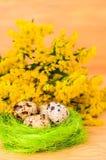 Kwartelseieren in het decoratieve nest voor Pasen Stock Foto's