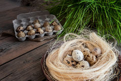 Kwartelseieren in het nest van stro op een achtergrond die van eieren, in een doos liggen, en groen gras Stock Afbeelding