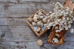Kwartelseieren in kleine mand en wilg - symbool van de Pasen Stock Fotografie