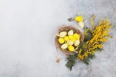 Kwartelseieren in nest en gele bloemen De groetkaart van Pasen Royalty-vrije Stock Afbeeldingen