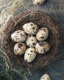 Kwartelseieren in nest met veer en hooi Stock Foto's