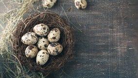 Kwartelseieren in nest met veer en hooi Royalty-vrije Stock Fotografie