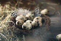 Kwartelseieren in nest met veer en hooi Stock Afbeelding