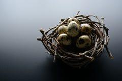Kwartelseieren in nest van takjes op een zwarte achtergrond royalty-vrije stock afbeeldingen