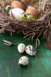 Kwartelseieren op Pasen-nest van de achtergrond van berktakjes stock fotografie