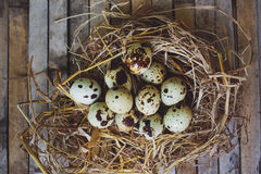 Kwartelsnest met bevlekte eieren Royalty-vrije Stock Foto