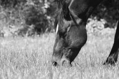 Kwartpaard stock foto's