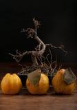 Kweepeer en bonsai stock fotografie