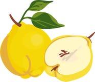 Kweepeerfruit Royalty-vrije Stock Foto's