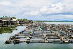 Kweken van vis Royalty-vrije Stock Foto