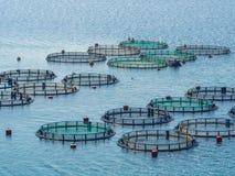 Kweken van vis Royalty-vrije Stock Afbeelding