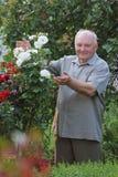 Kweker van rozen stock foto