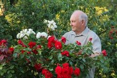 Kweker van rozen royalty-vrije stock foto
