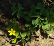 kWhite Schönheitsblume 143 Stockfotografie