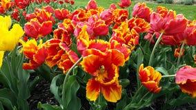 Kwiaciaści płomienie Fotografia Royalty Free