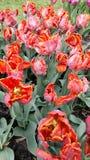 Kwiaciaści płomienie 2 Zdjęcie Royalty Free