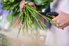 Kwiaciarni rozcięcia zieleń wywodzi się z secateurs Obraz Stock