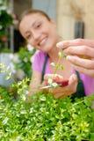 Kwiaciarnia arymażu sprig z rośliny fotografia stock