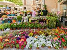 Kwiaciarnia przy Pollensa rynkiem, Mallorca fotografia stock