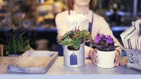 Kwiaciarnia sklepu sprzedawczyni kładzenie puszkujący kwitnie na kontuarze pokazywać zbiory wideo