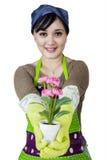 Kwiaciarnia trzyma kwiatu i pokazuje Zdjęcie Stock