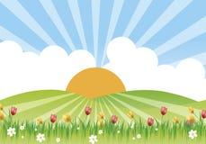 kwiaciasta łąki obraz royalty free