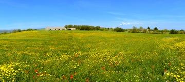 Kwiaciasta sceneria Obrazy Royalty Free