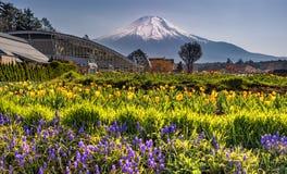 Kwiaciasty Mt fuji zdjęcia royalty free