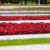 Kwiatów łóżka Obrazy Royalty Free