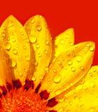 kwiatów abstrakcjonistyczni płatki Zdjęcia Royalty Free