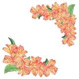 Kwiatów coners Botaniczna akwareli ilustracja alstroemeria kwiaty odizolowywający na białym tle z opisem ilustracji