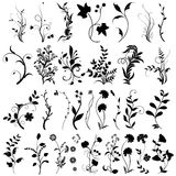 Kwiatów elementy Zdjęcie Stock