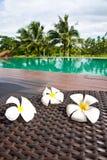 kwiatów frangipani basenu dopłynięcie Zdjęcie Royalty Free