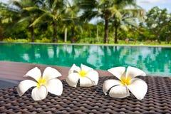 kwiatów frangipani basenu dopłynięcie Obrazy Stock