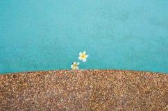 kwiatów frangipani basenu dopłynięcie Obraz Royalty Free