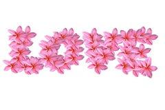 kwiatów frangipani miłości menchie Obrazy Stock