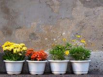 kwiatów garnki Zdjęcia Royalty Free
