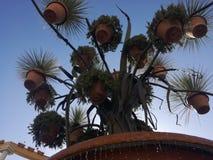 Kwiatów garnki Zdjęcia Stock