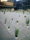 Kwiatów garnki powystawowi Obrazy Royalty Free