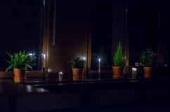 Kwiatów garnki przy okno nocą Obraz Royalty Free